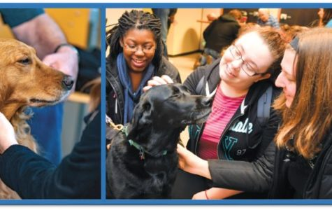 Still a Chance to See Comfort Dogs